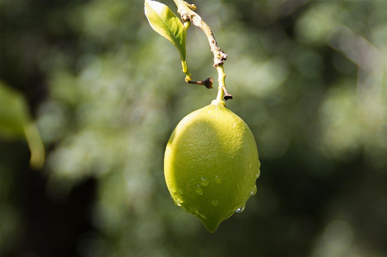 lemon-624967_1280